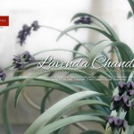 Lavenda Chandelier with Green Leaves
